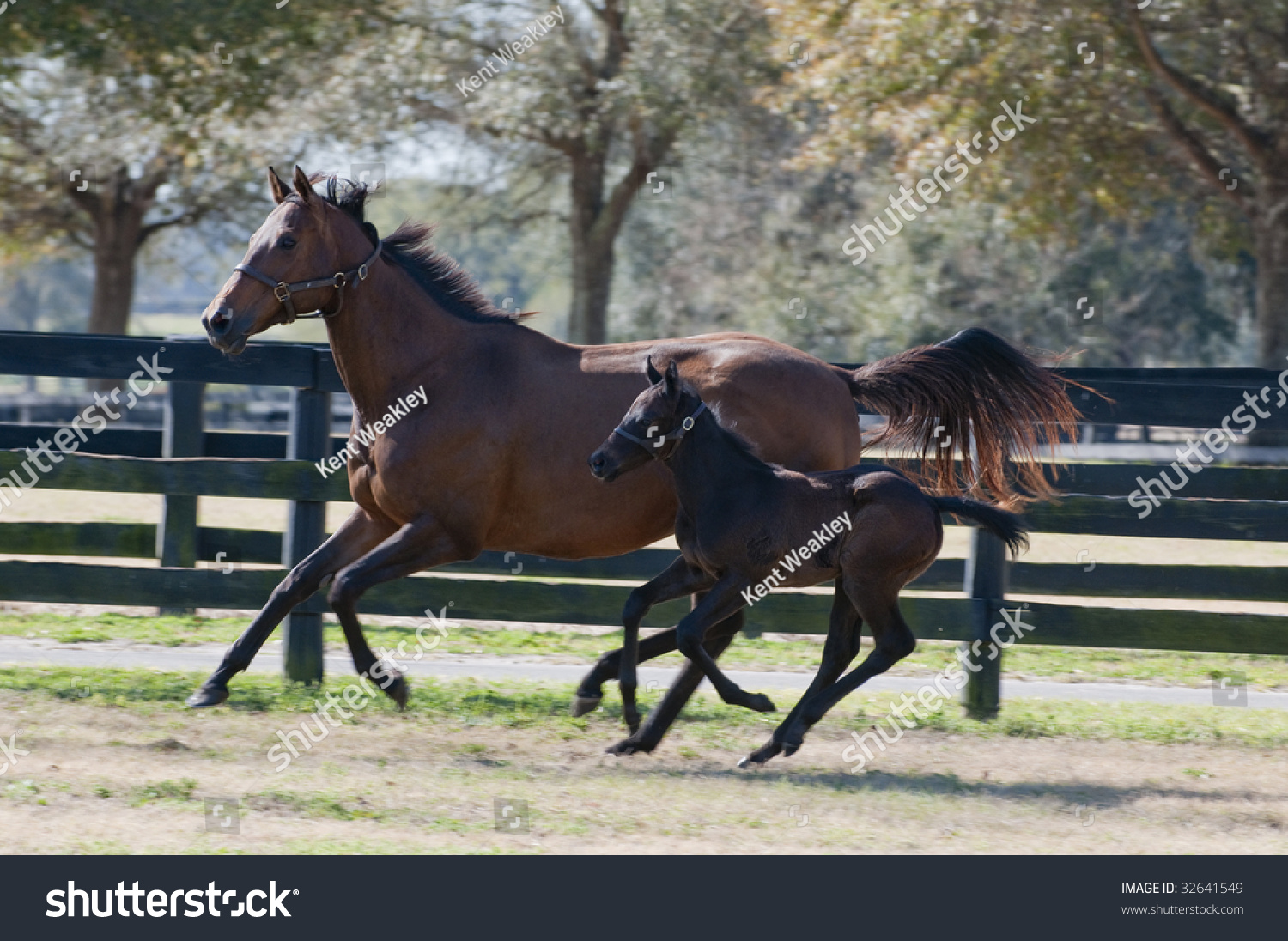 Beautiful Mother Baby Mare Foal Horse Stock Photo Edit Now 32641549