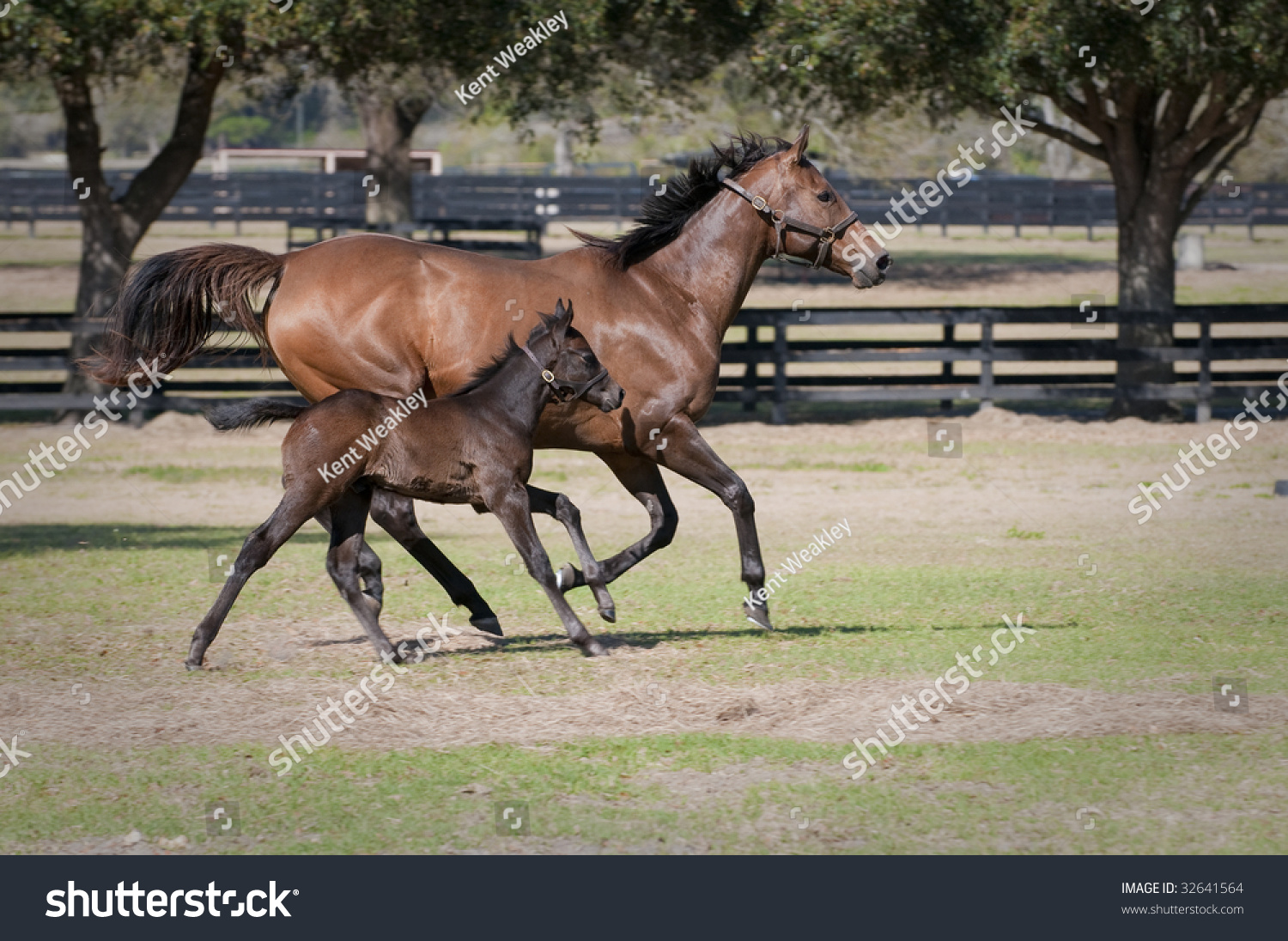 Beautiful Mother Baby Mare Foal Horse Stock Photo Edit Now 32641564