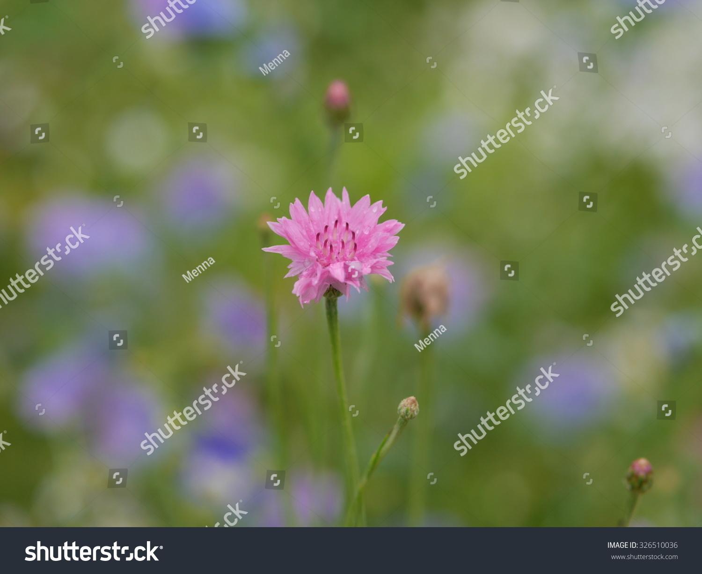 Wild Spring Flowers In Springtime Ez Canvas