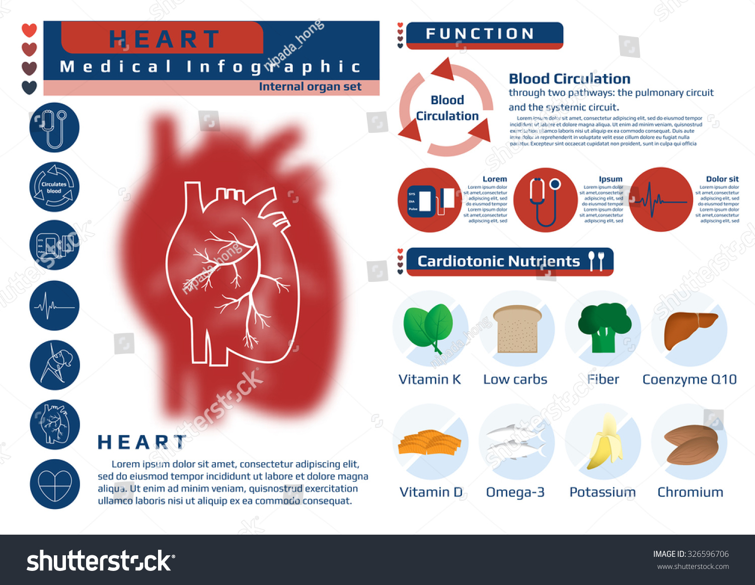 Function Nutrition Supplement Heart Medical Health Stock Vector ...