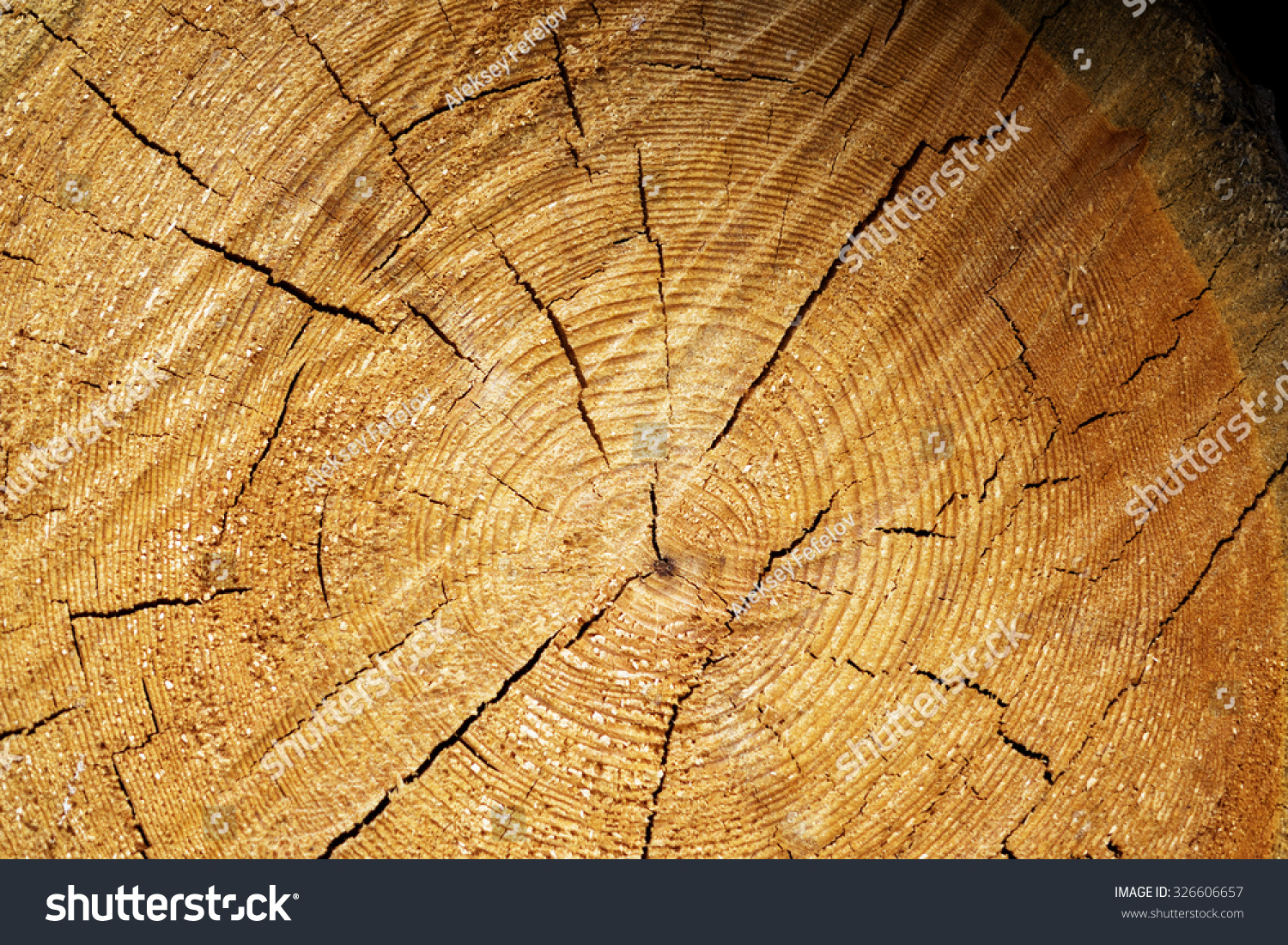 Sawing Logs Elm Tree Background For Websites And Printing Ez Canvas