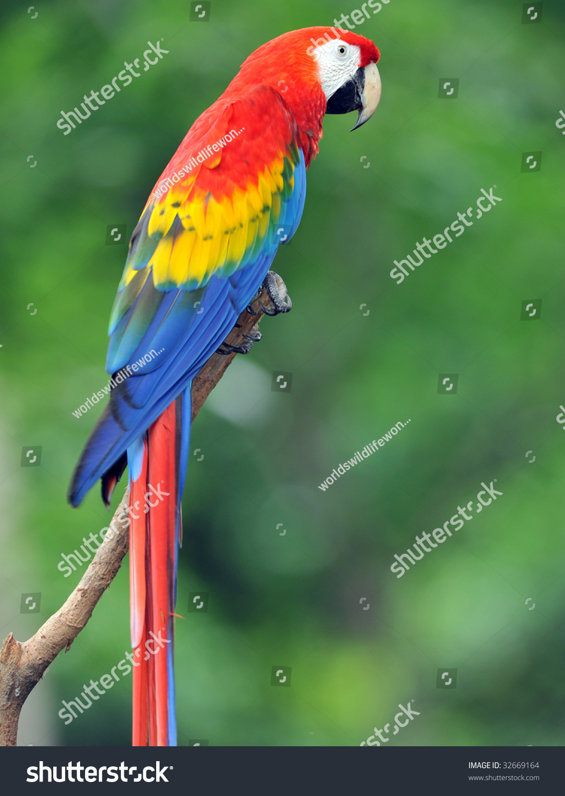 ... macaw, corc...