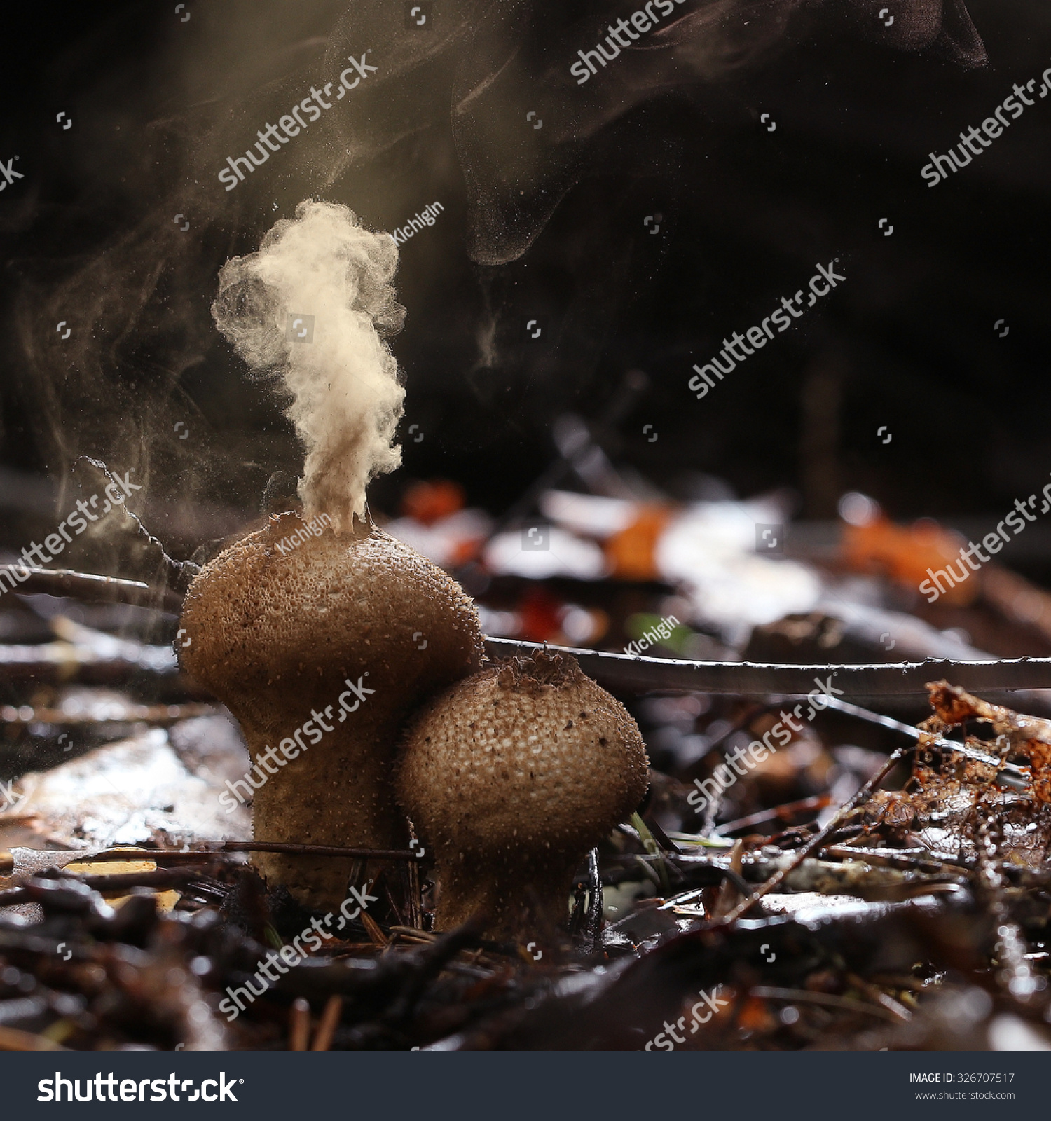 Puffball Fungus Spores Reproduction Smoke Mushroom Stock ... Puffball Mushroom Smoke