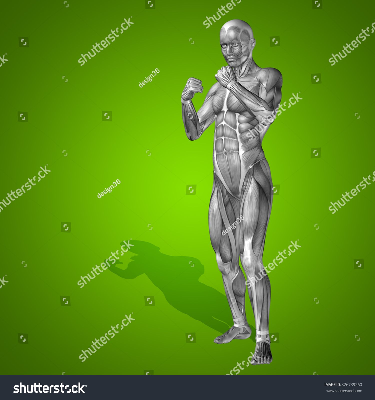 Conceptual Strong Human Man 3d Anatomy Body With Muscle For Health Illustration Graphics Contest Full Diagram Sport On Green Background Medicine Male Muscular Medical