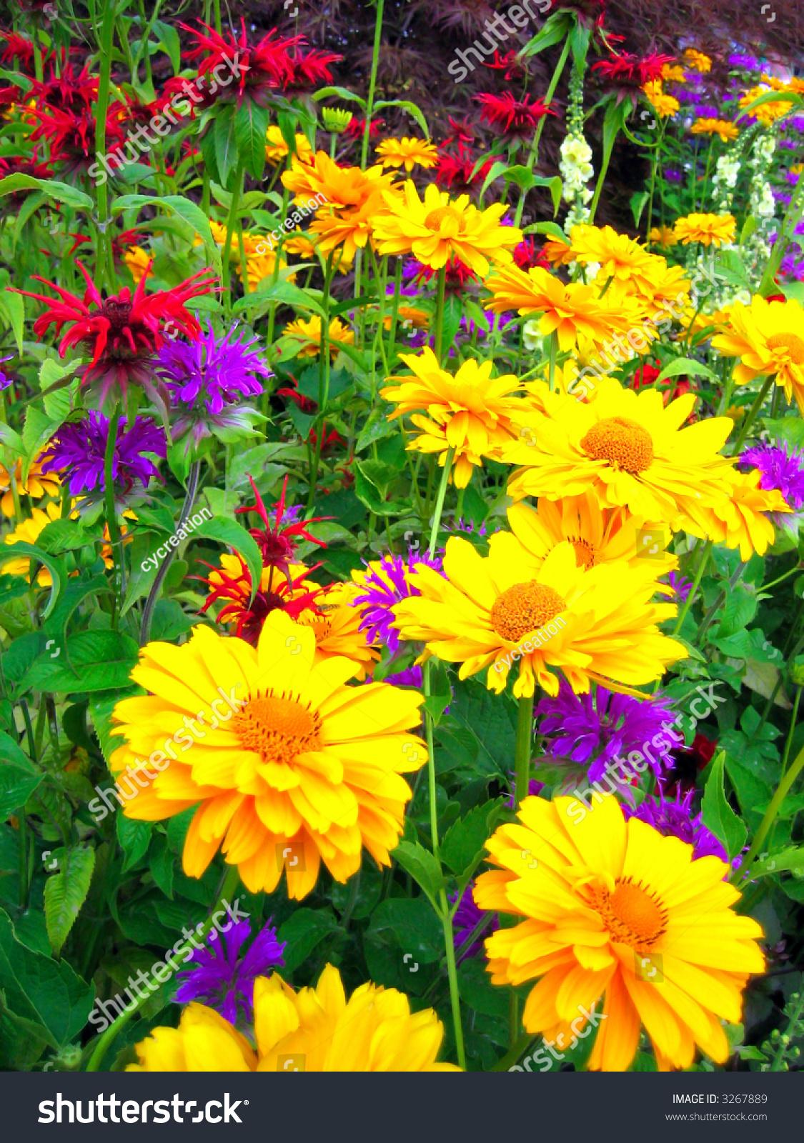 Bright yellow flowers summer season stock photo edit now 3267889 bright yellow flowers in summer season mightylinksfo
