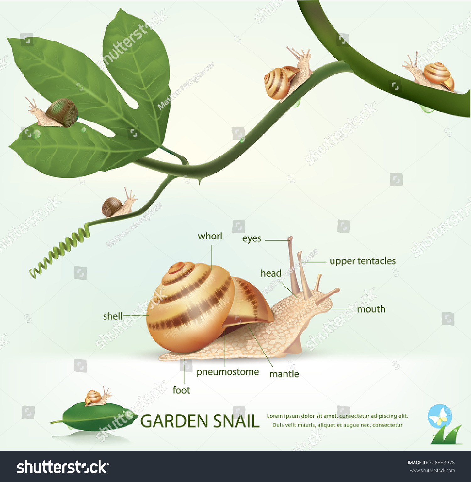 Garden Snail On Branch Isolated On Stock Vector Royalty Free
