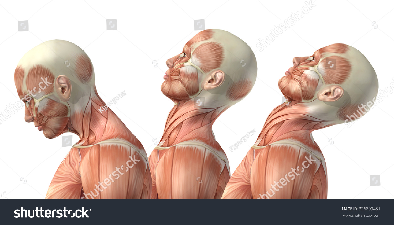 3 D Render Medical Figure Showing Cervical Stock Illustration ...
