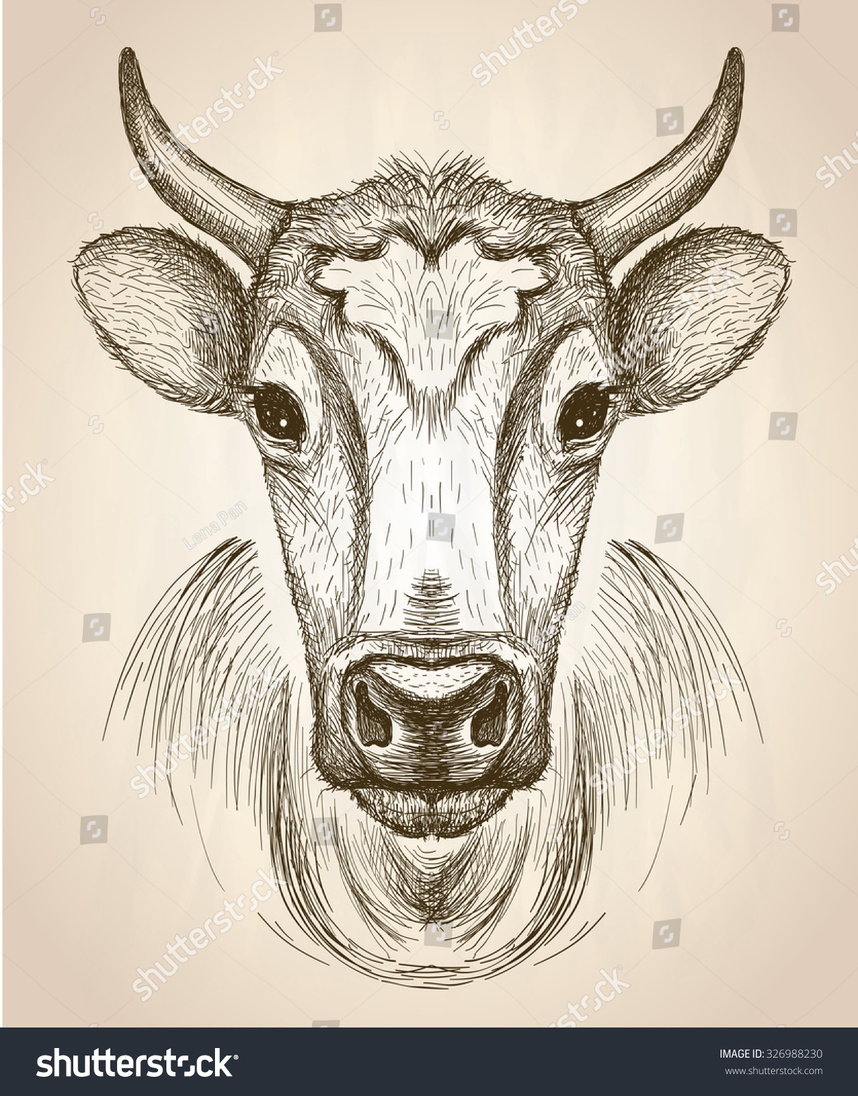 Line Drawing Cow Face : Cow face portrait front view vector stock