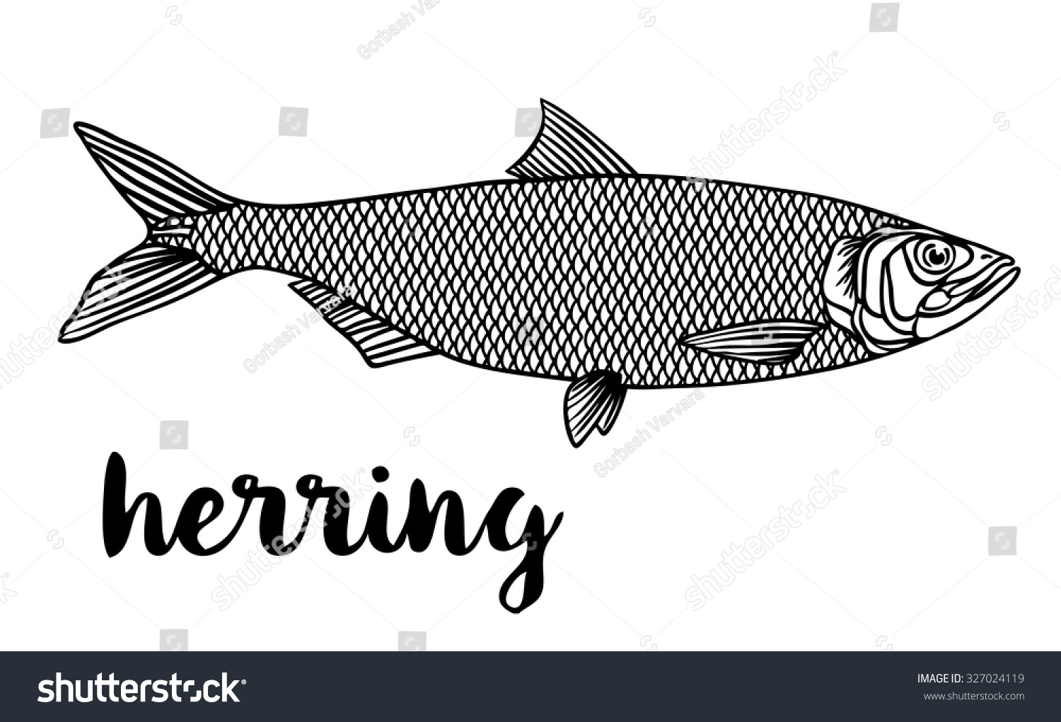 herring coloring pages - photo#19
