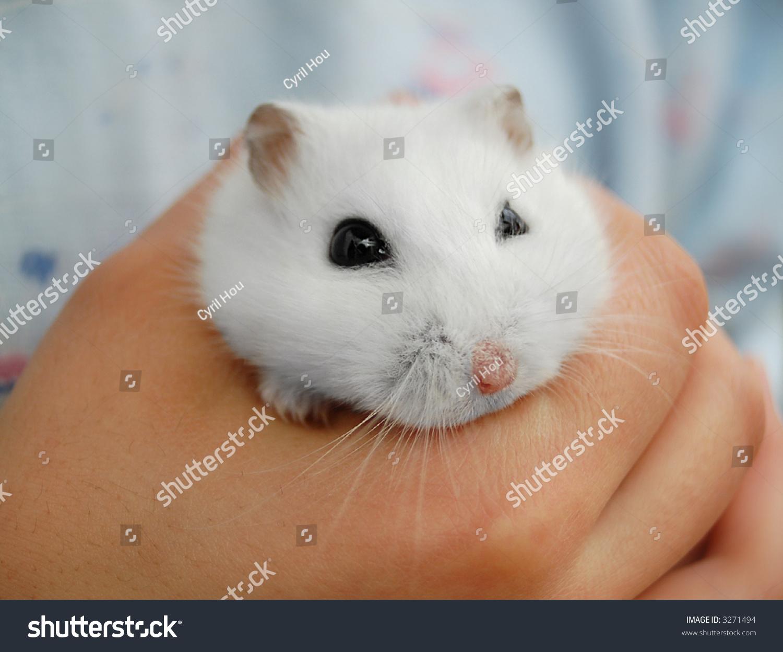 hamster poilu Ebony Teen énormes seins
