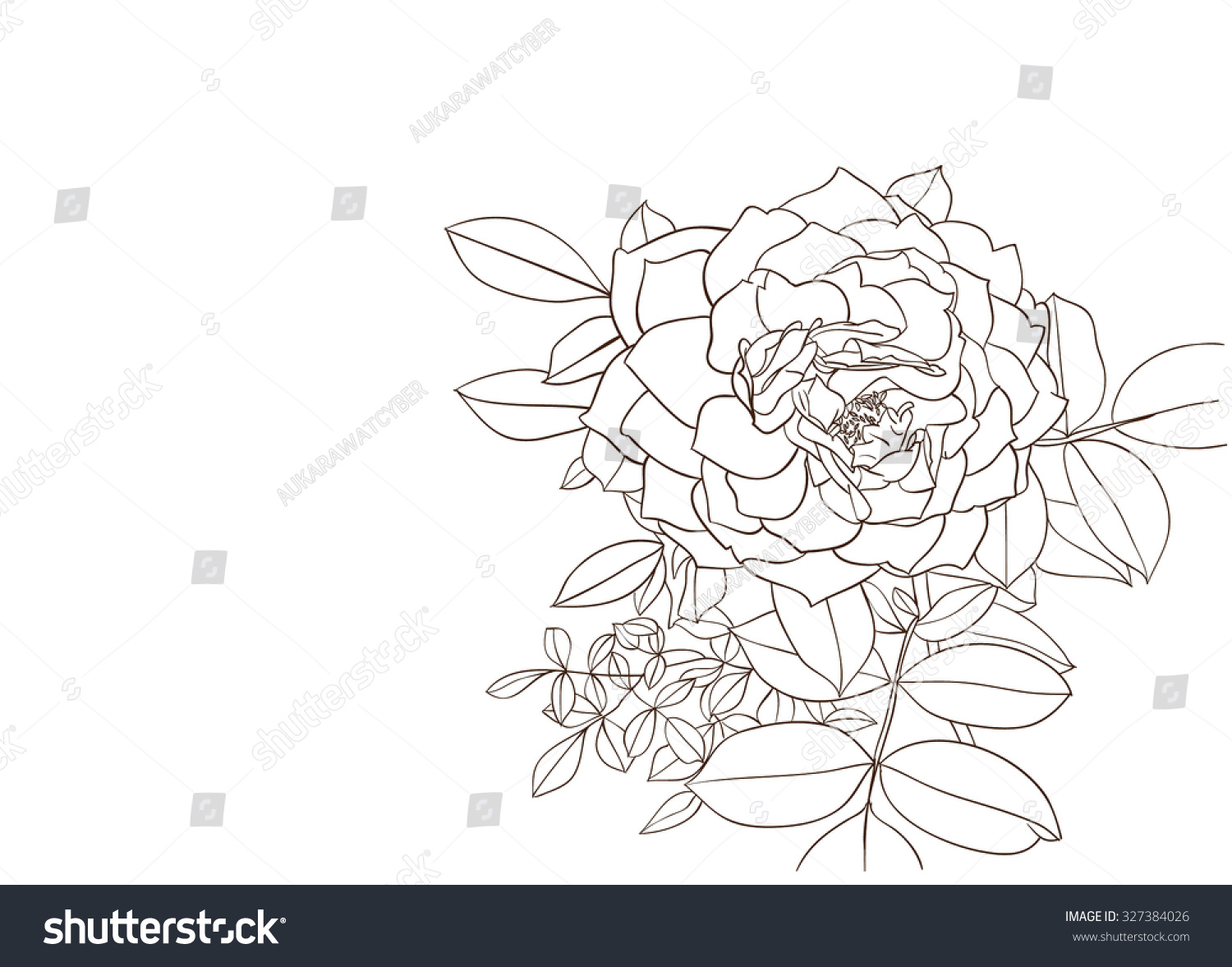 Contour Line Drawing Rose : Chinese style drawings sketches peony ez canvas