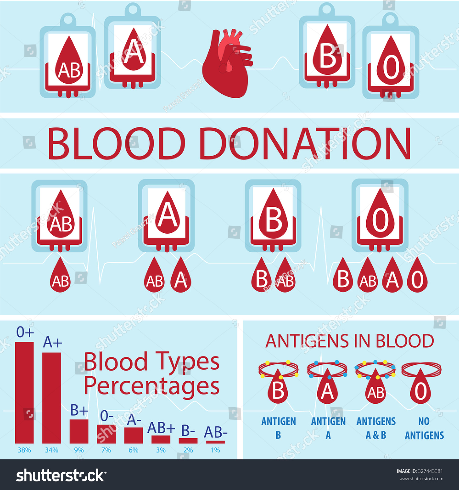 Sexy women Blood group percentage adore tes