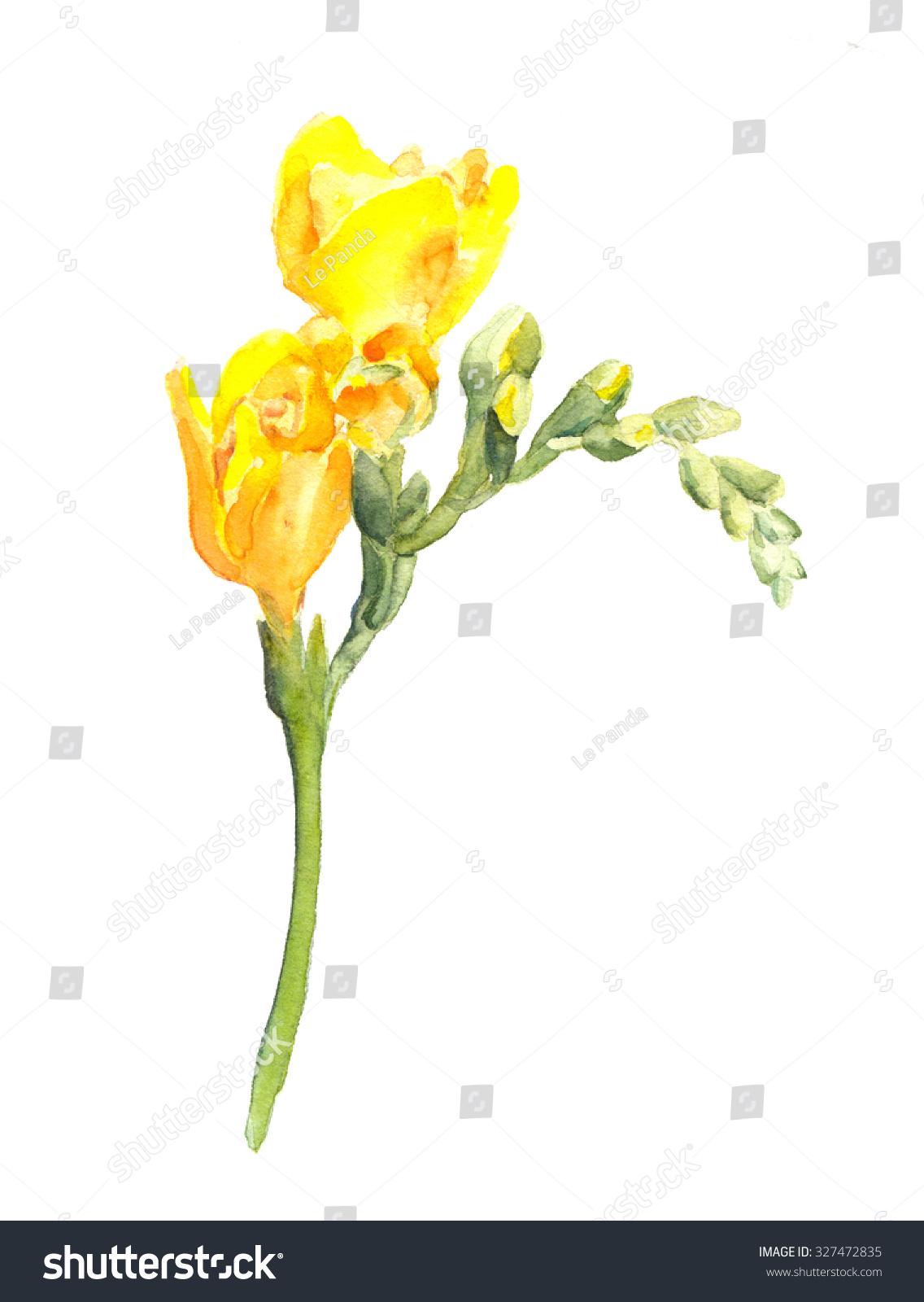 Yellow Freesia Flower Watercolor Ez Canvas