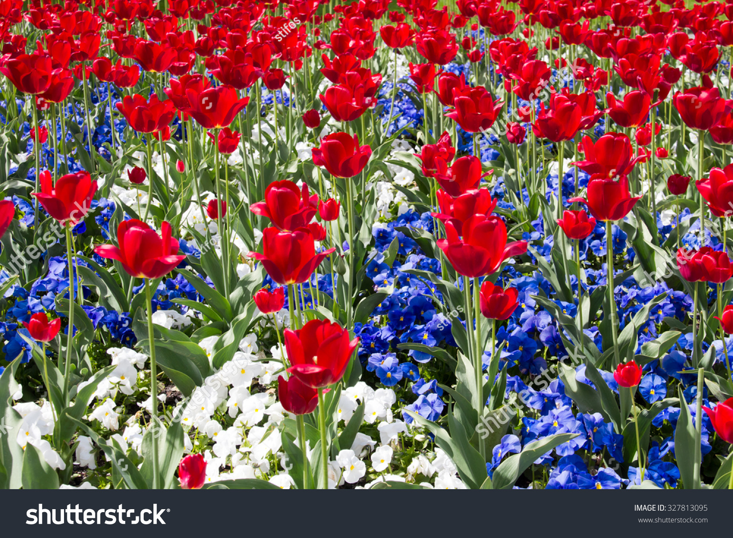 Red white blue flowers stock photo 327813095 shutterstock red white and blue flowers izmirmasajfo Gallery
