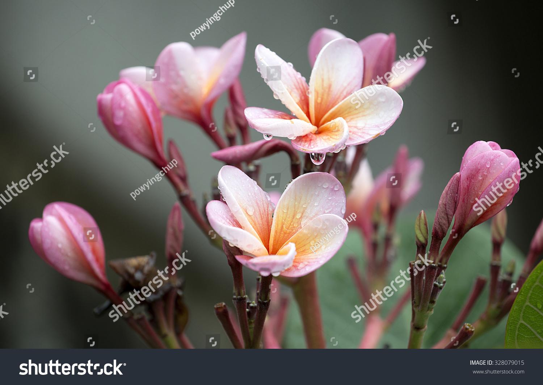 Beautiful flowers blooming rain stock photo 328079015 shutterstock beautiful flowers blooming in the rain izmirmasajfo Images