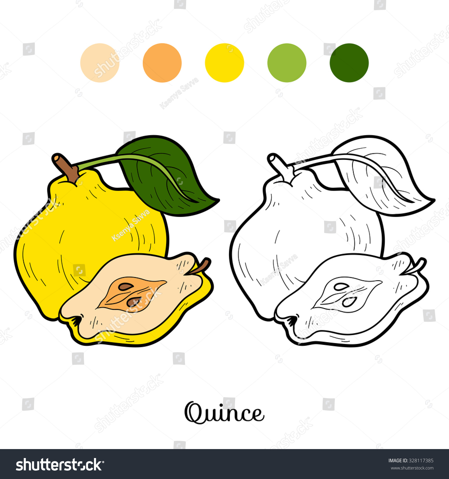 Coloring Book Fruits And Vegetables Quince