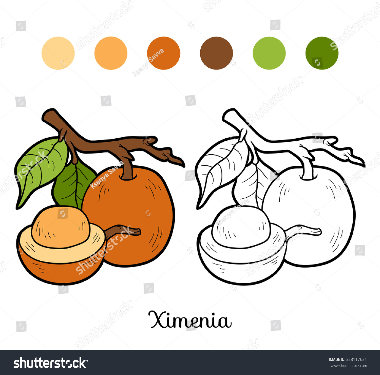 Coloring Book Fruits And Vegetables Ximenia