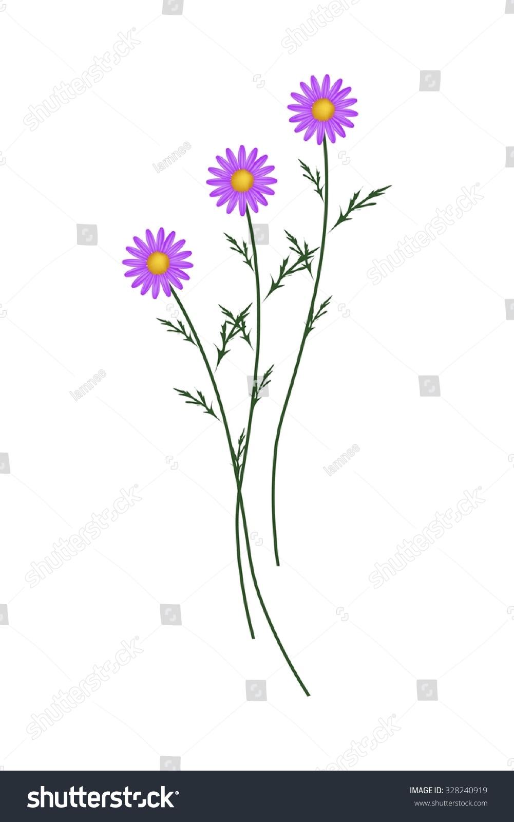 Symbol Of Love Bright And Beautiful Purple Osteospermum Daisy
