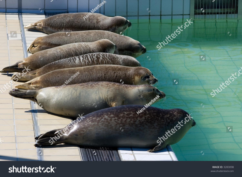 stock-photo-seven-seals-in-a-seal-sanctu