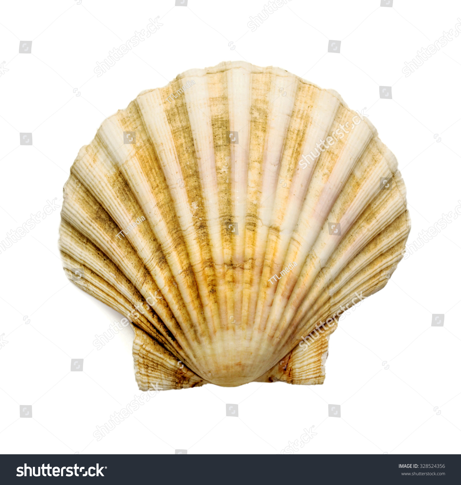 Scallop shell over white background stock photo 328524356 shutterstock scallop shell over white background biocorpaavc Image collections