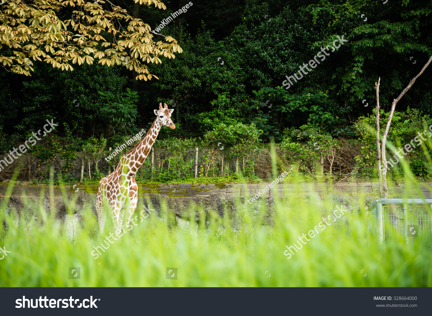 Nagoya Japan August 15 2015 Reticulated Stock Photo ...