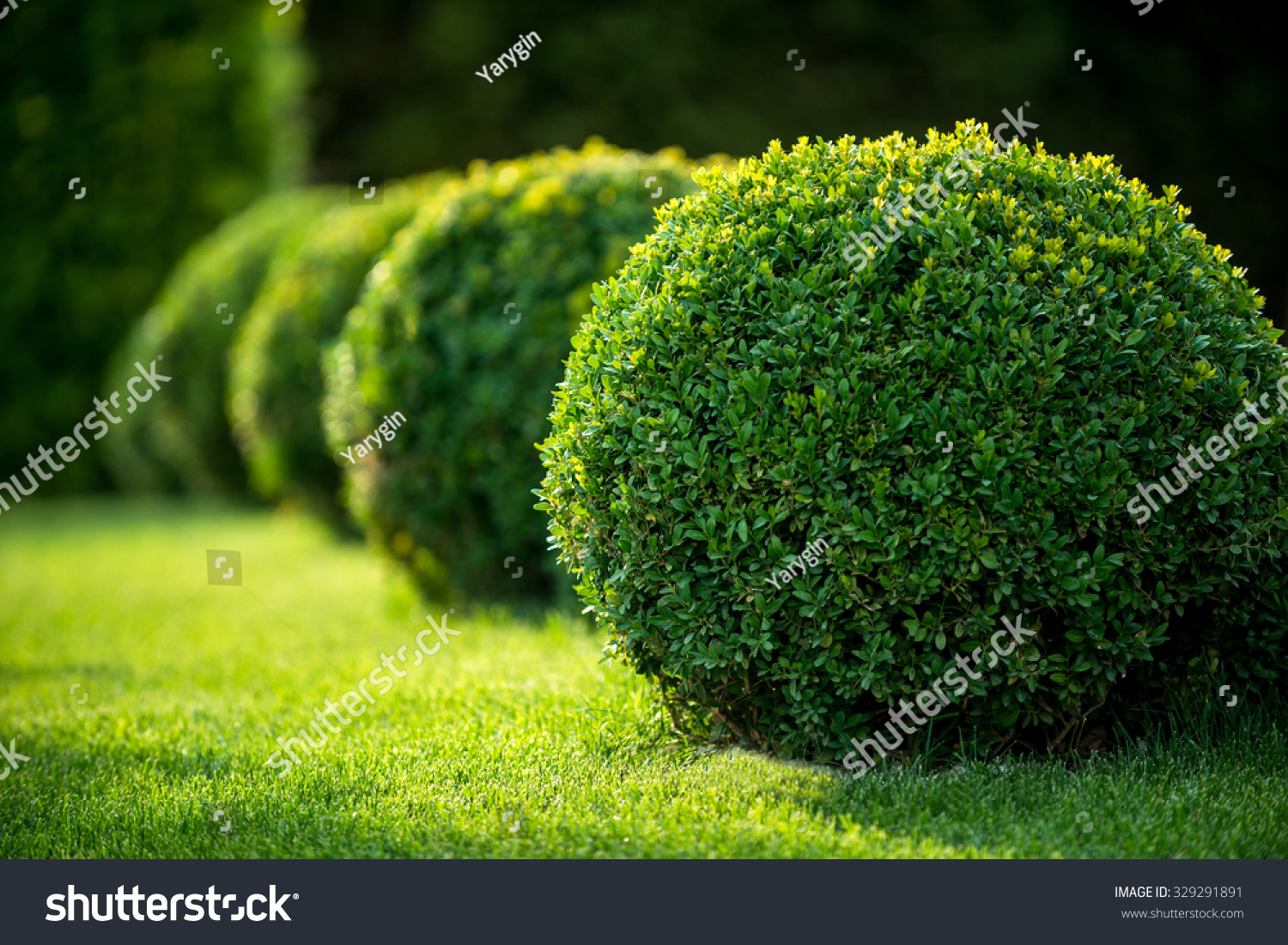 park with shrubs and green lawns, landscape design #329291891