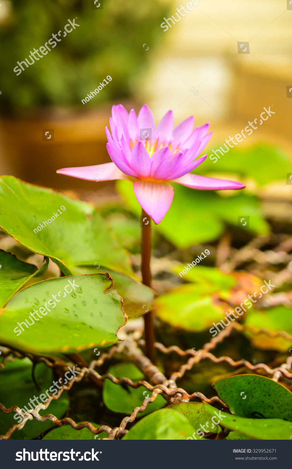 Lotus Flower Represents Peace Stock Photo Royalty Free 329952671