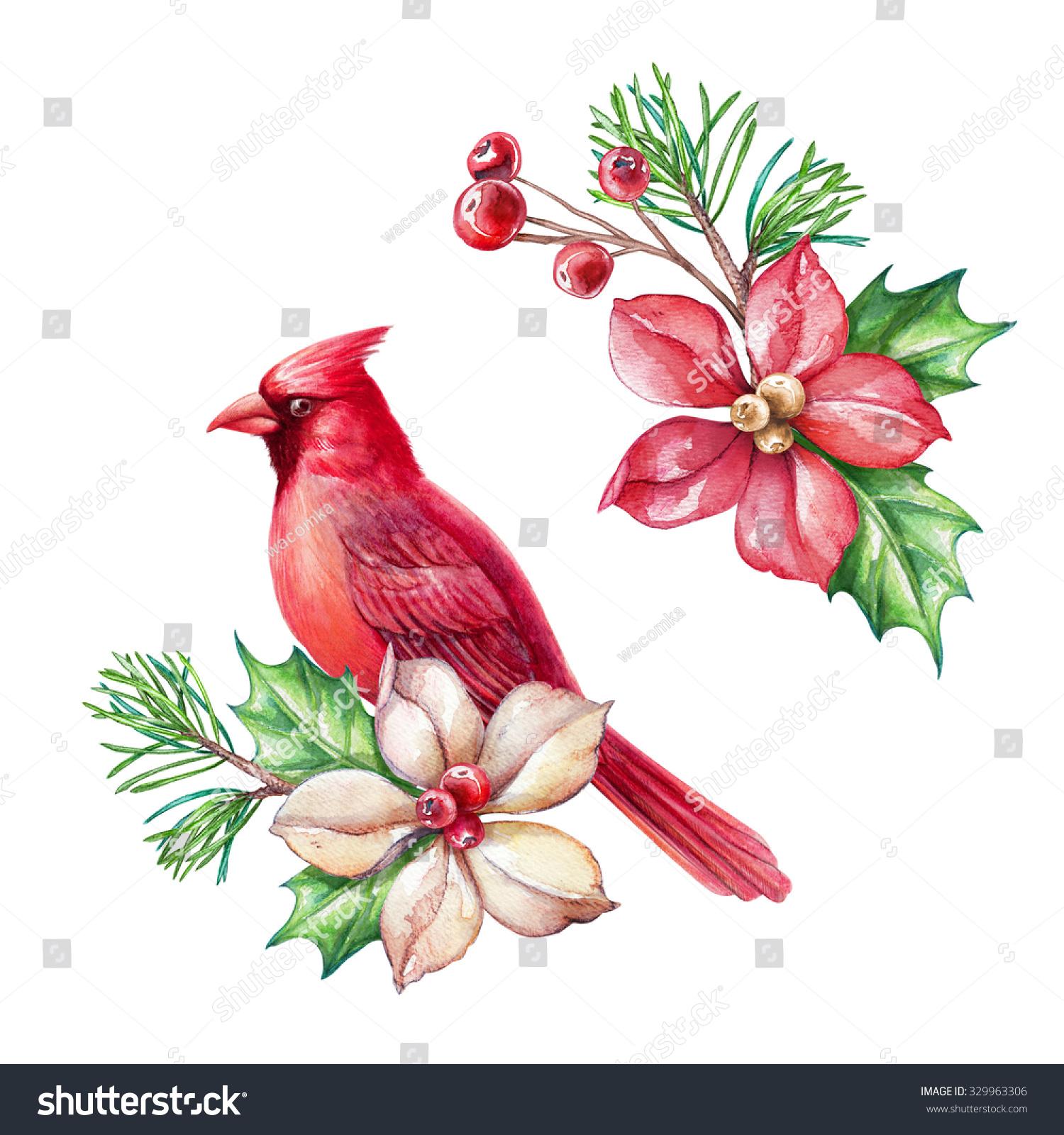 Red Bird Poinsettia Flower Christmas Holiday Stock ...