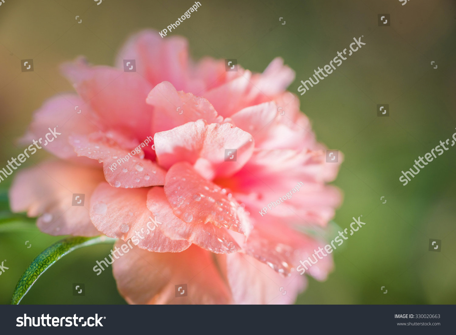 Pretty Little Flowers That Known Many Stock Photo Edit Now