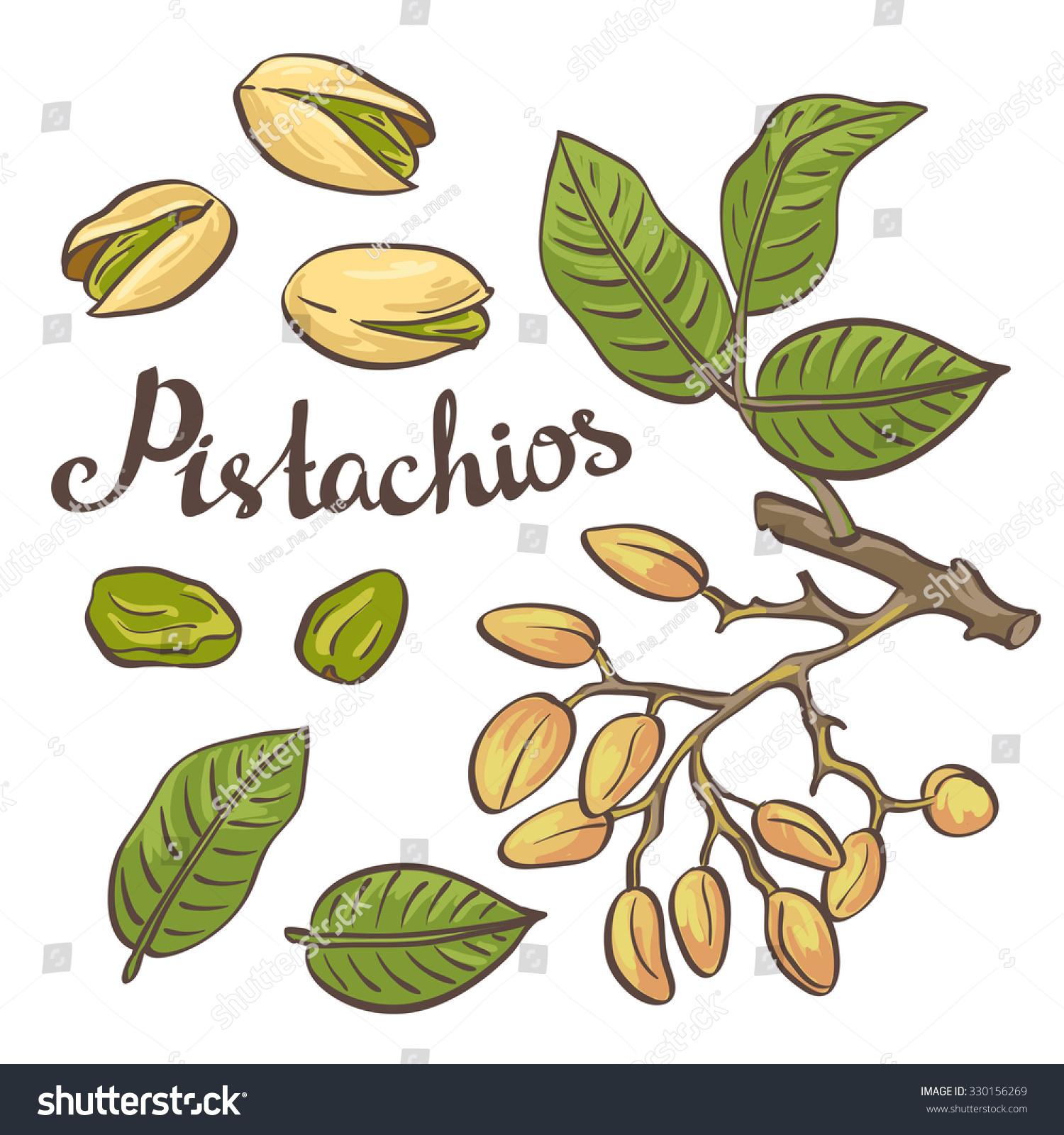 tree nut clip art - photo #38
