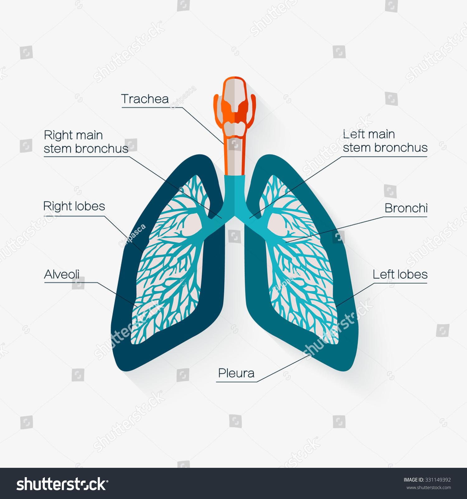 Flat Design Icon Human Lungs Diagram Stock Vector Royalty Free