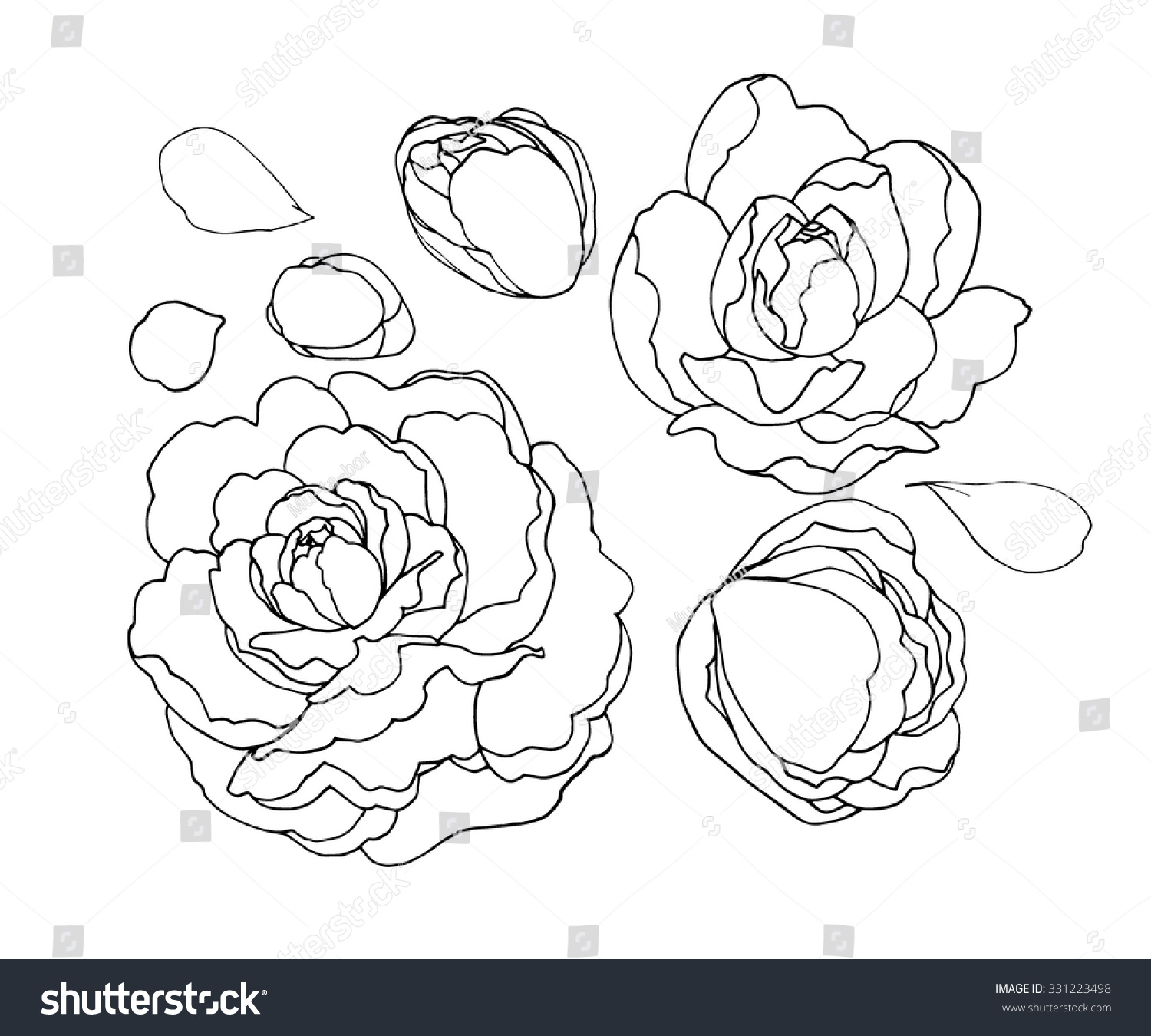 how to draw a peony for kids