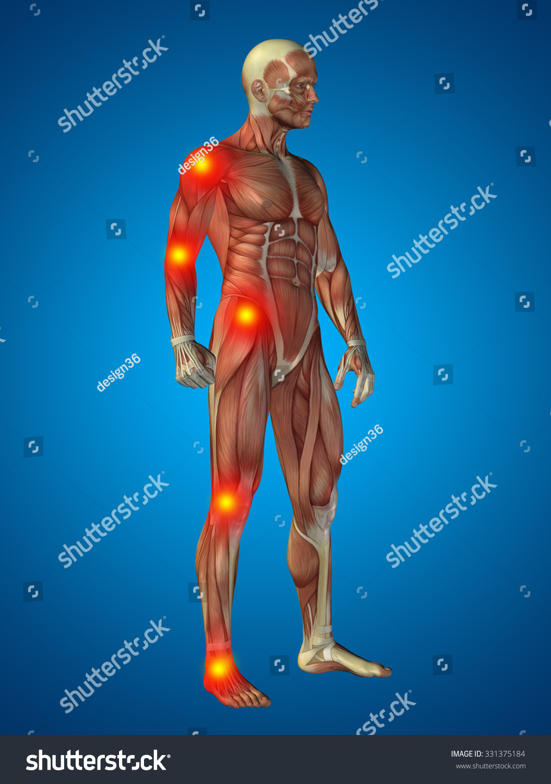 3 D Human Man Muscles Anatomy Health Stock Illustration 331375184