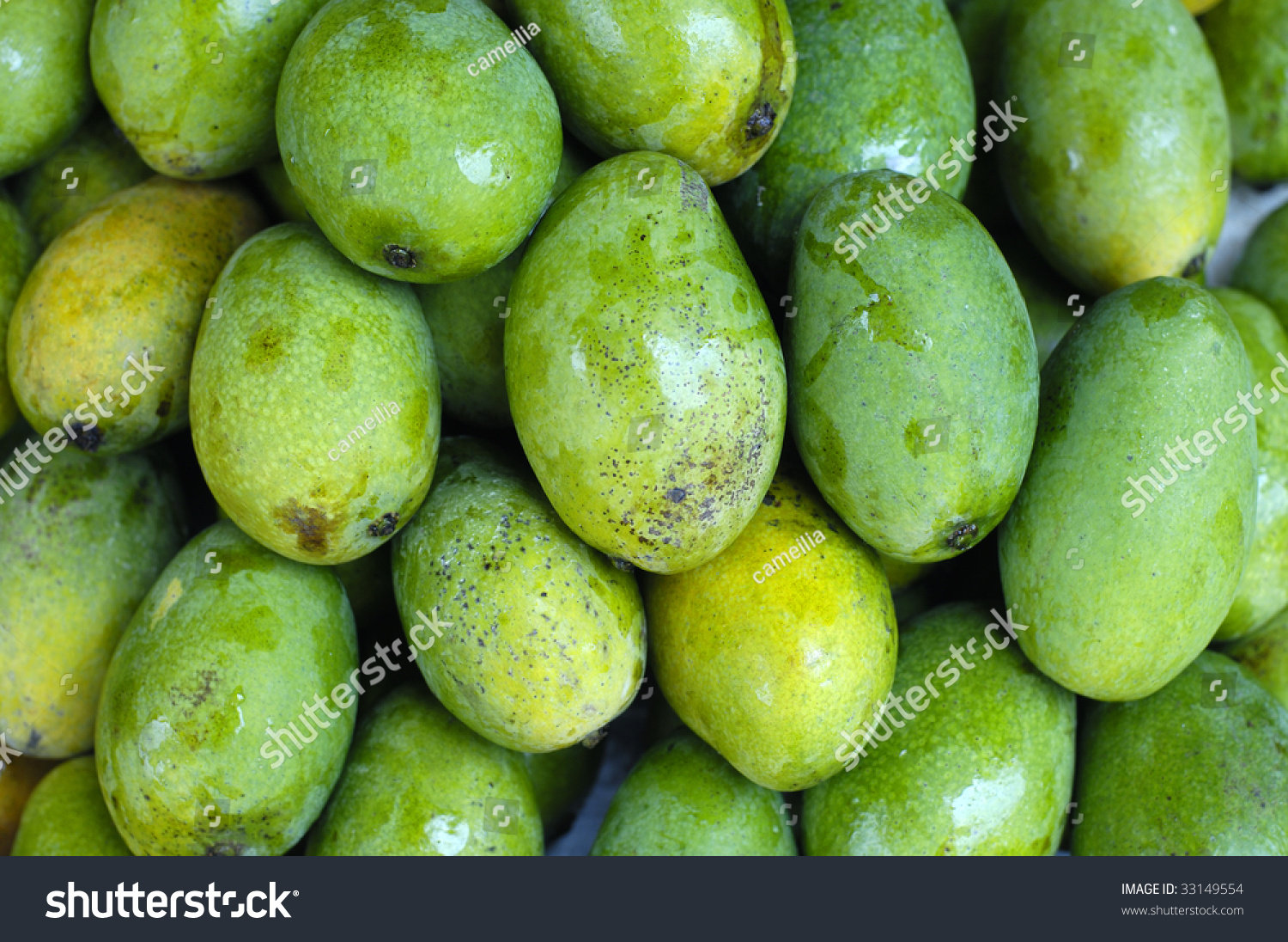 tropical fresh green mango background stock photo 33149554