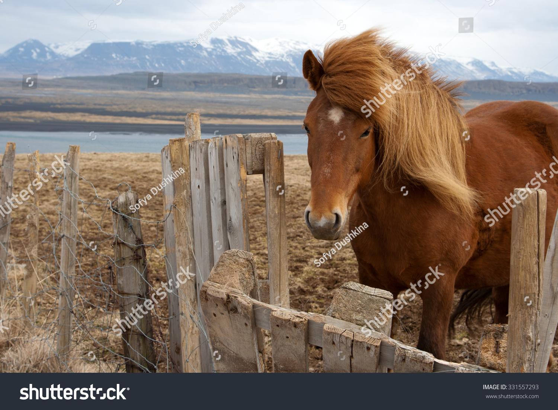 fluffy horses - photo #48