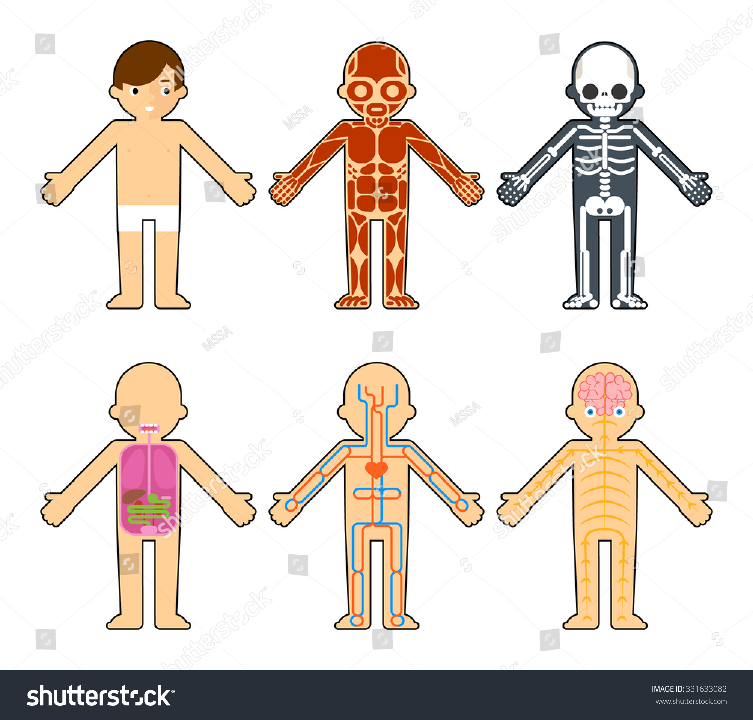 Body Anatomy Kids Skeleton Muscles Nervous Stock Vector Royalty