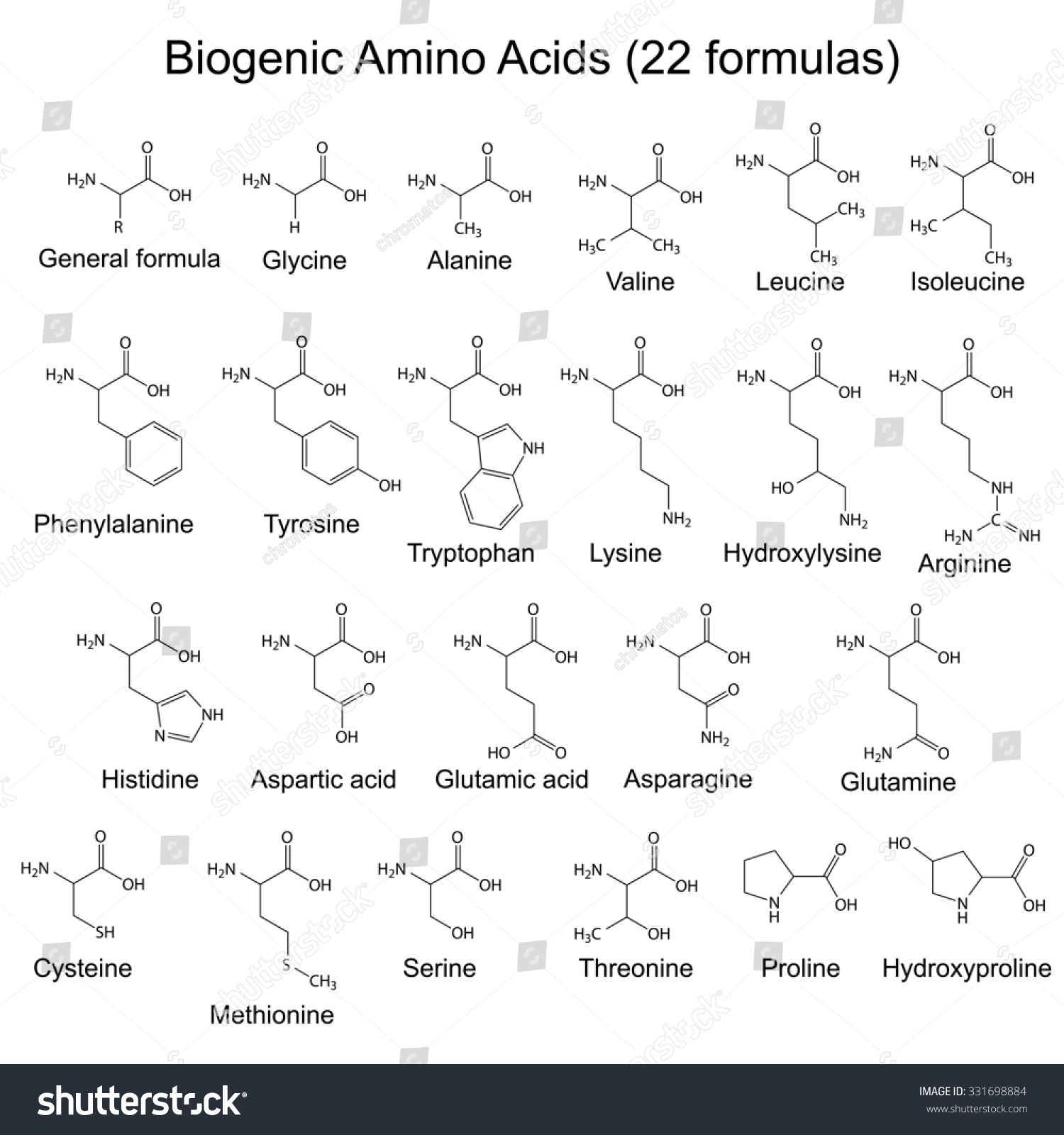 how to connect amino acids