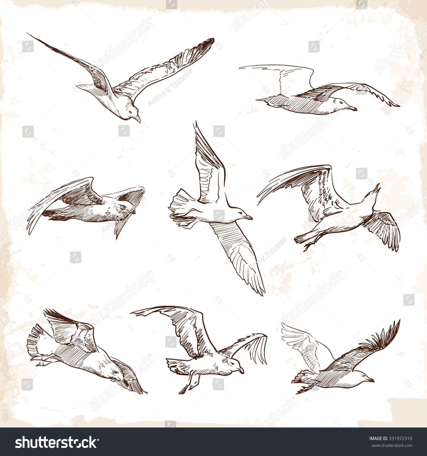 Set of sketches of flying swallows stock vector illustration - Flying Seagulls Set Of 8 Original Wild Life Drawings Representing Different Phases Of A Bird
