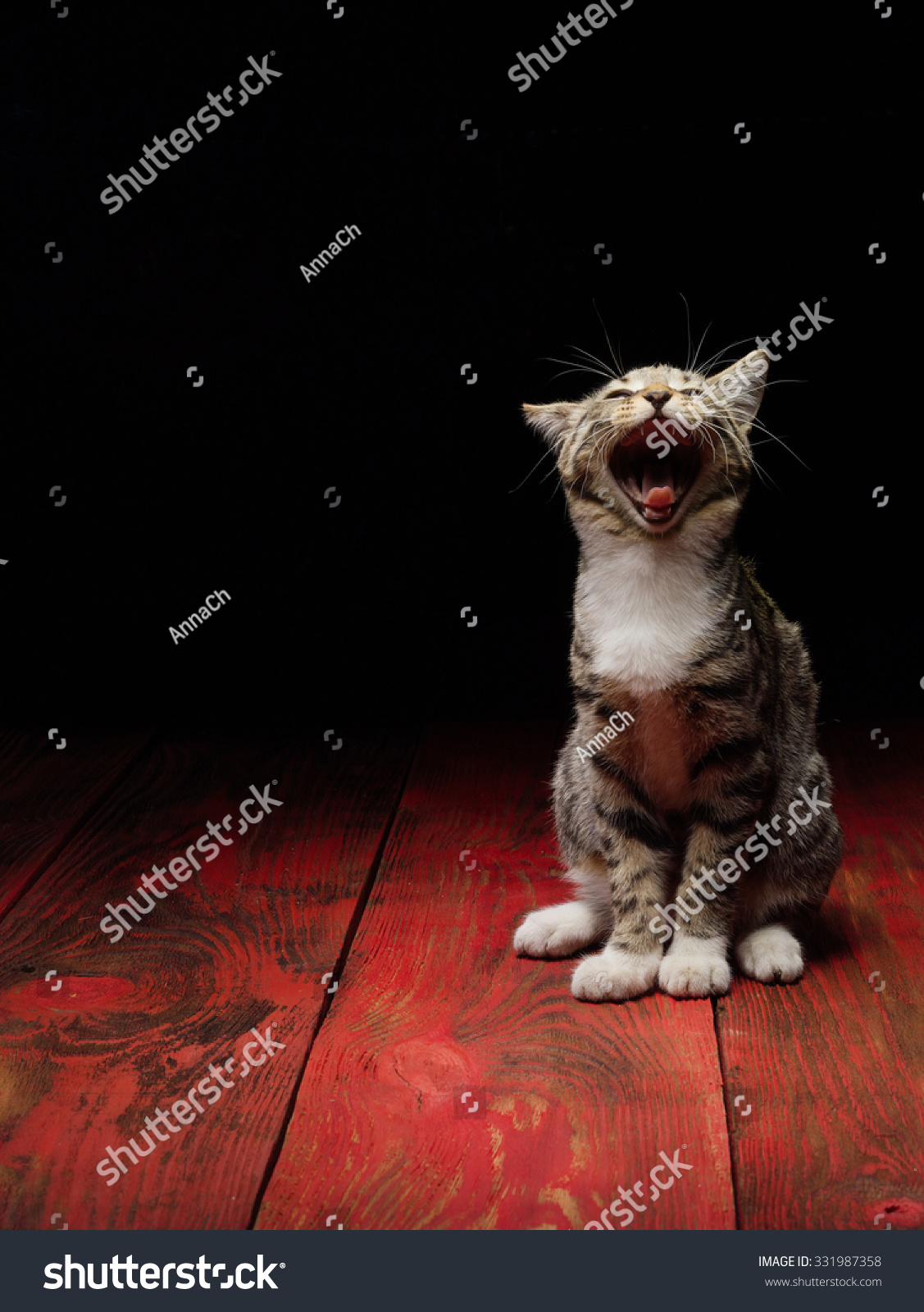 Cute Funny Kitty Cat Red Stock Shutterstock