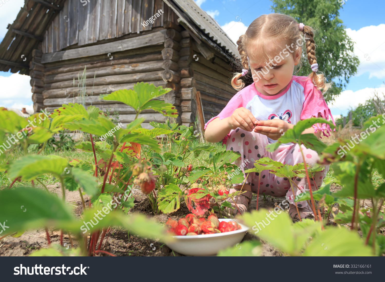 Preschooler Blonde Girl Is Gathering Home Grown Garden