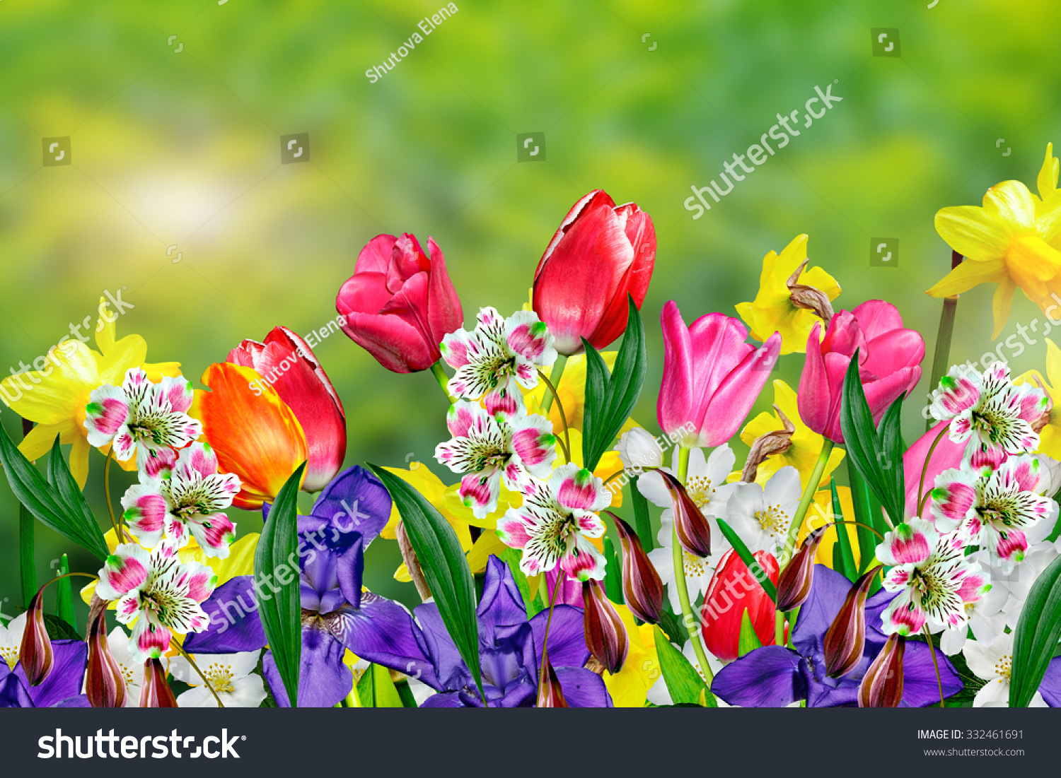 Spring Flowers Daffodils Tulips Stock Photo Image Royalty Free