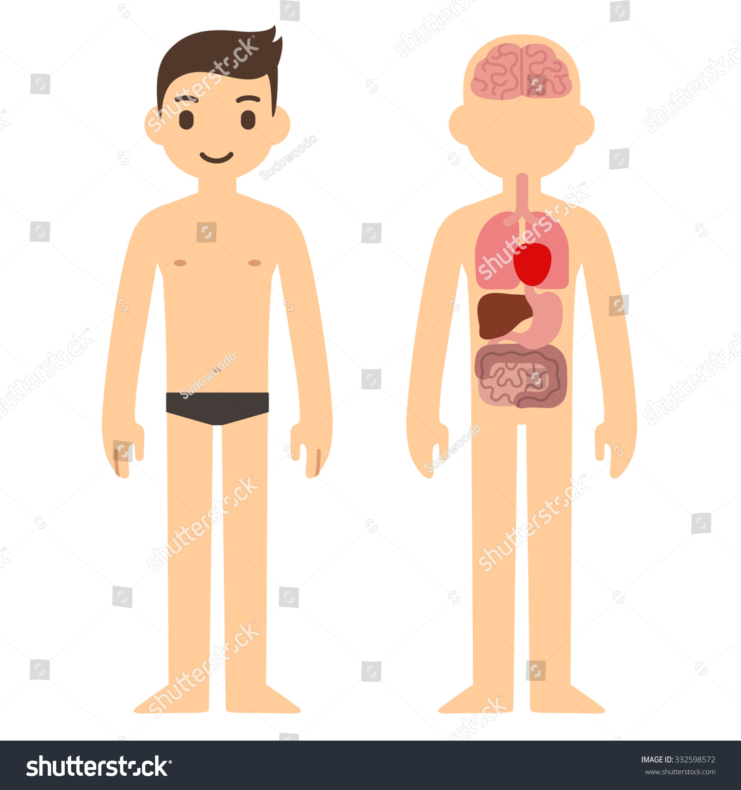 Human Internal Organ Infographic Chart Stylized Stock Illustration