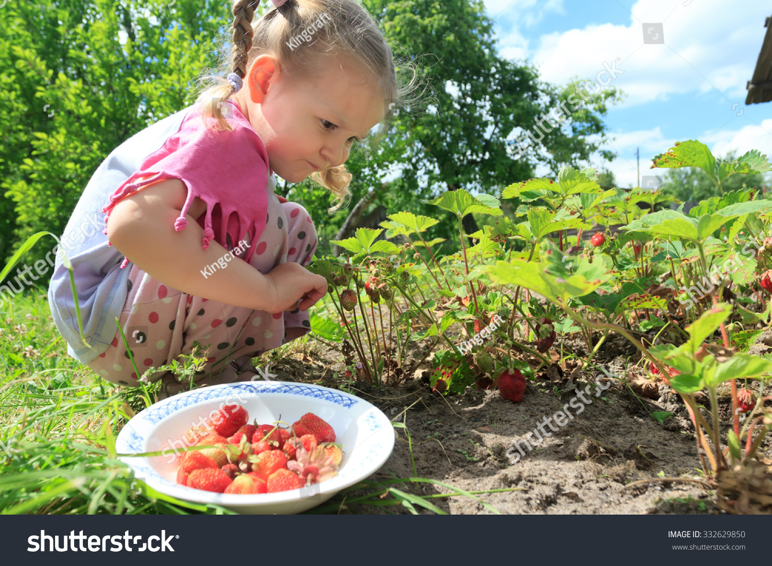 Toddler Blonde Girl Is Picking Home Grown Garden