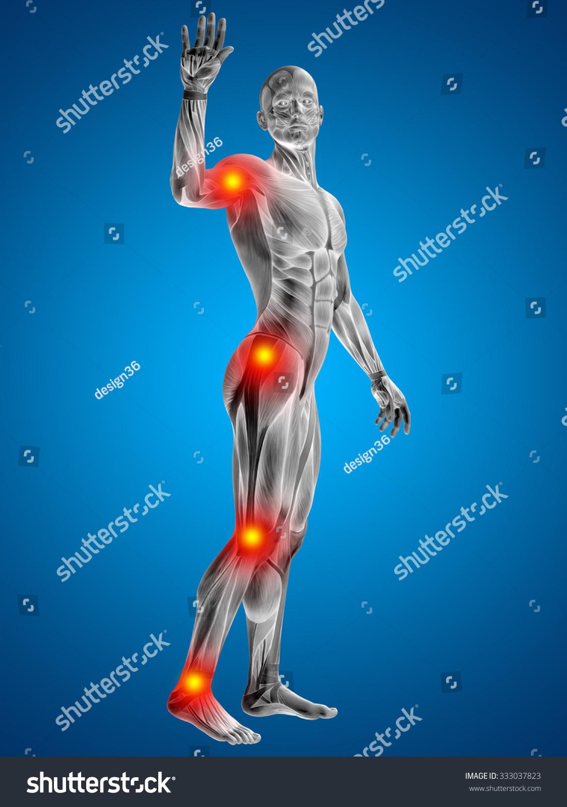 3 D Human Man Muscles Anatomy Health Stock Illustration 333037823 ...