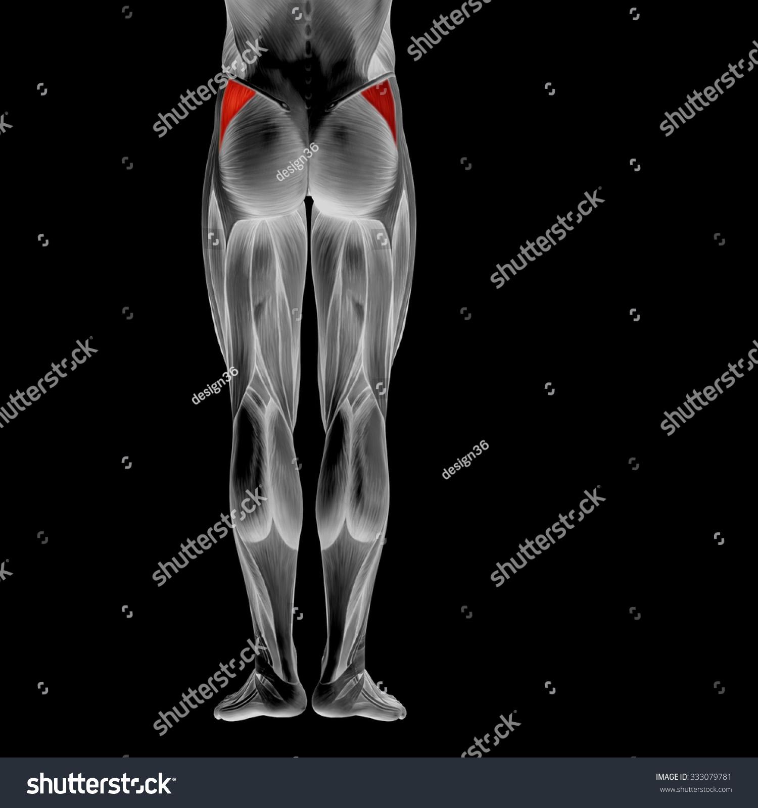 Concept Conceptual 3 D Human Upper Leg Stock Illustration 333079781 ...