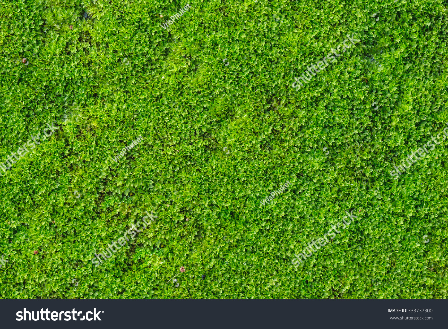how to get rid of green moss on concrete