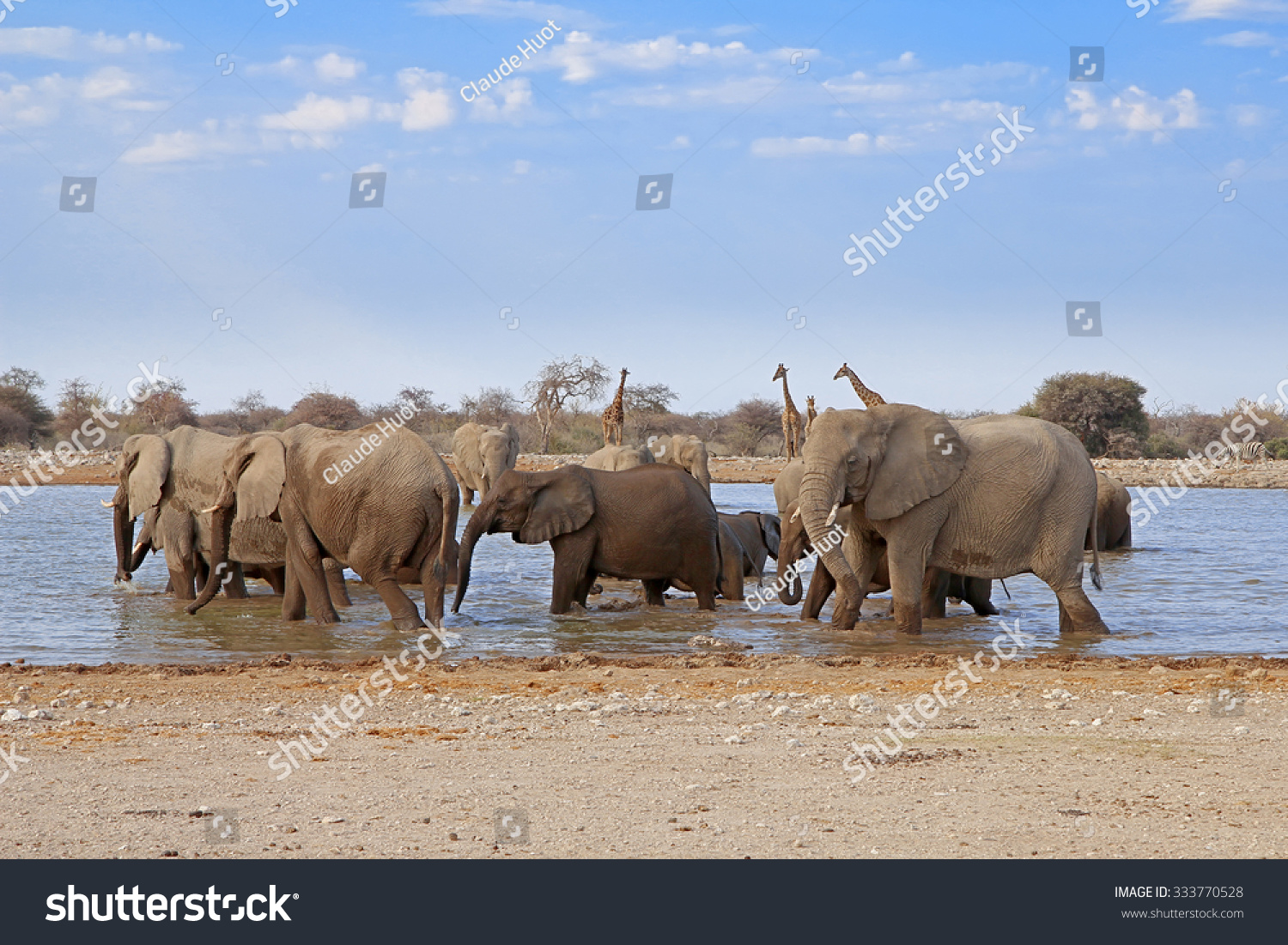 Herd of elephants (Loxodonta afrcana) drinking and bathing at a waterhole in Etosha National Park, Namibia