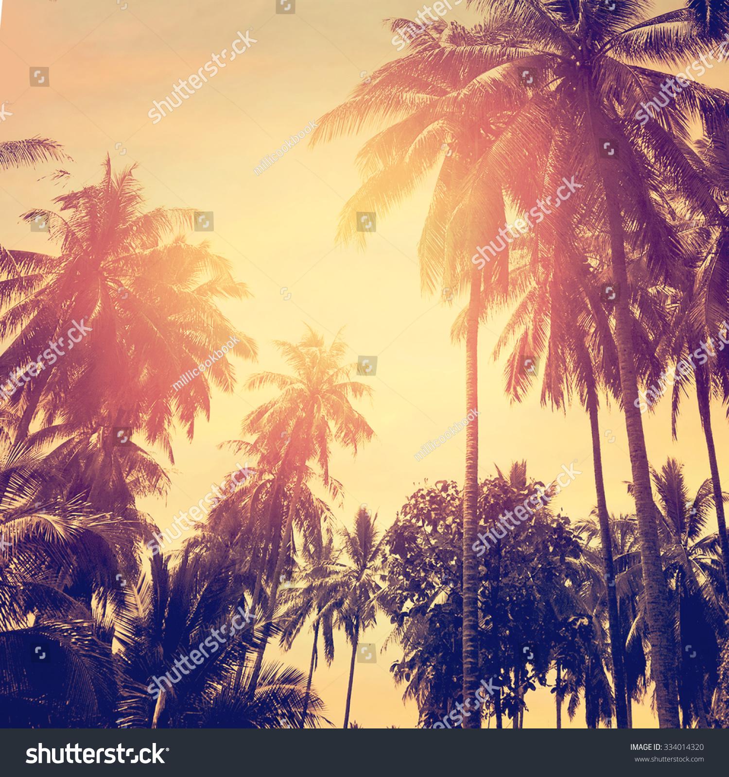 Tropical Beach Landscape Coconut Palm Trees Stock Photo