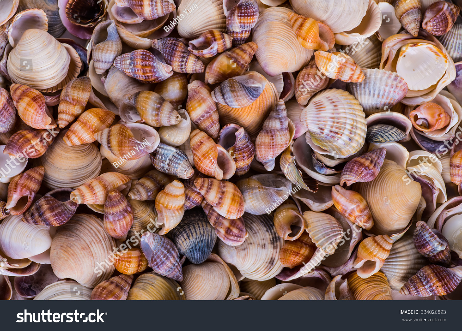 Sea shells seashells variety sea shells stock photo 334026893 sea shells seashells variety of sea shells from beach panoramic with large biocorpaavc Image collections