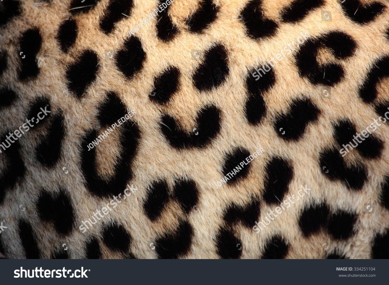 Real Leopard Print Pattern